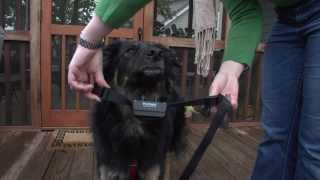 Petsafe® Wireless Mapping Training Video