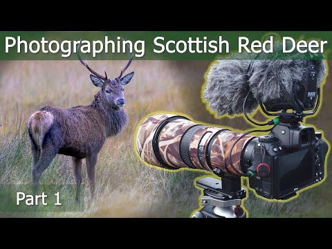 Scottish RED DEER RUT Part 1: Deer, Downpours & Ditches | Wildlife Photography | Nikon Z7 + 500mm PF