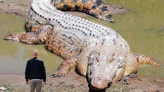 Вот Как Выглядит Самая Большая Рептилия в Мире
