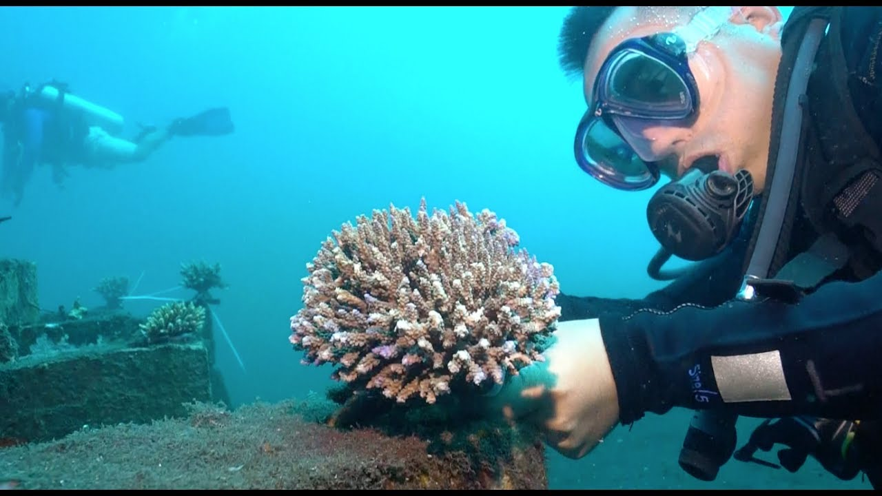 Image result for coral reefs china