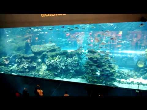 2013.11.13 - EMIRATES - Dubai Mall Aquarium