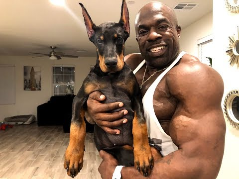 TRAINING MY DOBERMAN PUPPY | Kali Muscle