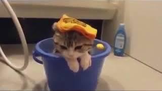 Улетные приколы с кошками которые любят купаться Смотрим и улыбаемся