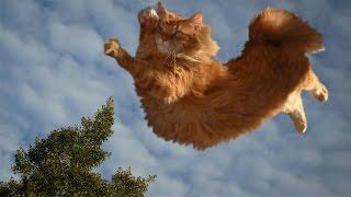 Приколы про котов и людей самые смешные: паркур от кота [#8]