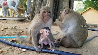 Best family monkey actions in whole eat