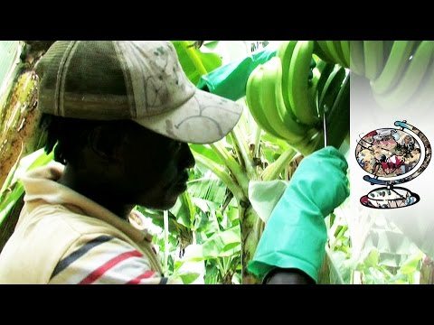 Is Fairtrade As Fair As It Claims? (2010)