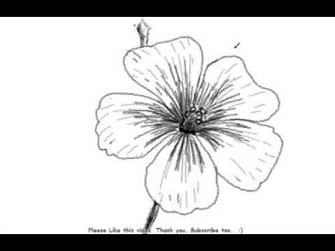 How To Draw A Beautiful And Simple Flower Youtube
