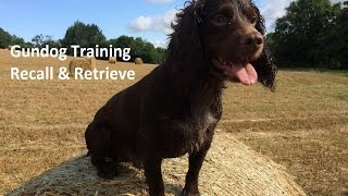 Gundog Training - Recall & Retrieve