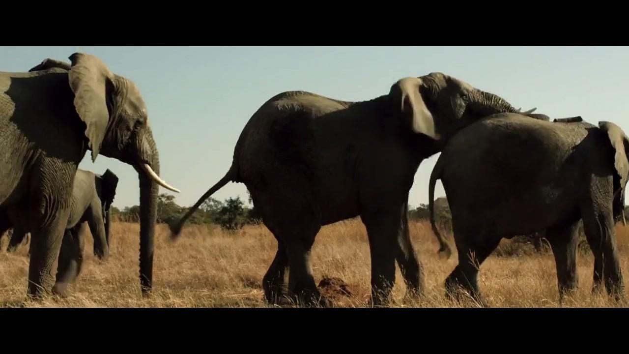 Elephant free movie naked spy