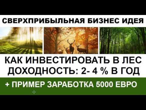 Как инвестировать в Лес с доходностью  2 4% И пример заработка 5000 евро на покупке леса в Финляндии