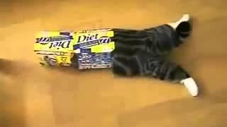 Кот и коробки. Знаменитый кот-коробочник!
