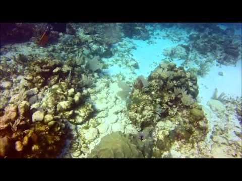 cancun Scuba diving isla mujures MUSA