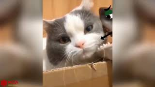 Funniest 😻Cats and 🐶Dogs   Try Not To Laugh or Grin While Watching Funny Animals