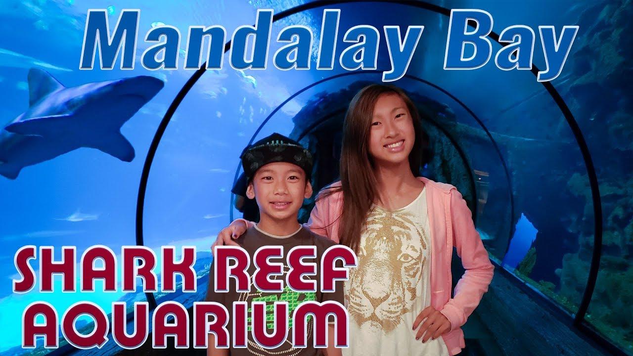 shark reef aquarium at mandalay bay las vegas adventures youtube