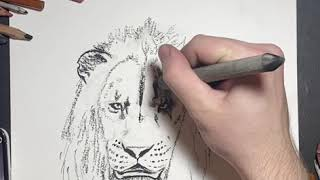 Scar Lion King (2019) Drawing Tutorial. Endangered Earth Clothing