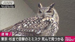 """杉並区のミミズク死んで見つかる """"飼い主""""の元へ(19/02/25) thumbnail"""