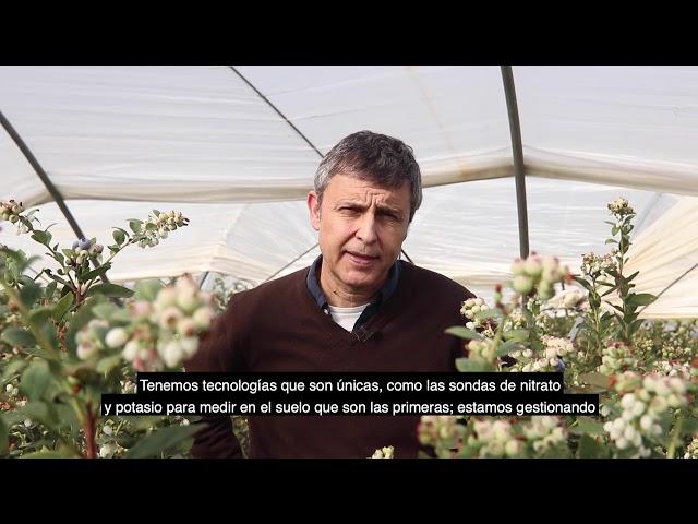 La agricultura de frutos rojos del Condado, aliada de la sostenibilidad