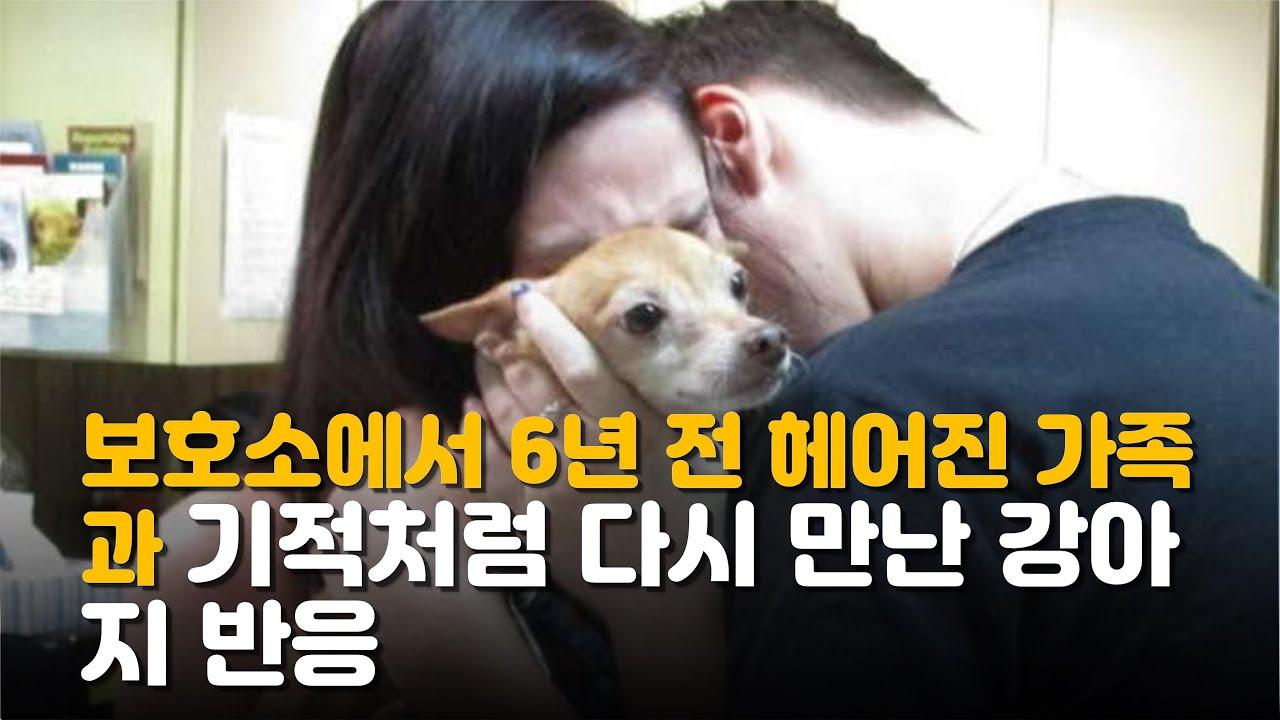 보호소에서 6년 전 헤어진 가족과 기적처럼 다시 만난 강아지 반응