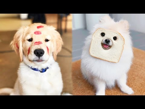 ♥Cute Puppies Doing Funny Things 2019♥ #3  Cutest Dogs