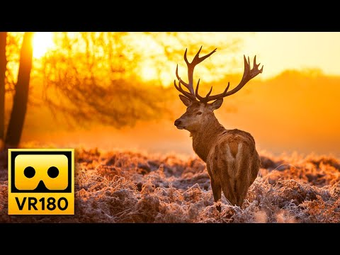 Beautiful Forest Wildlife in VR180  Deers & Elks - Relaxing 3D Virtual Reality Experience