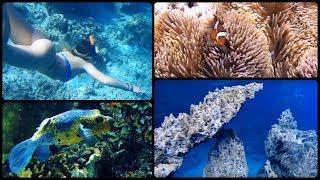 Coron, Philippines UNDERWATER (Part 1) - GoPro