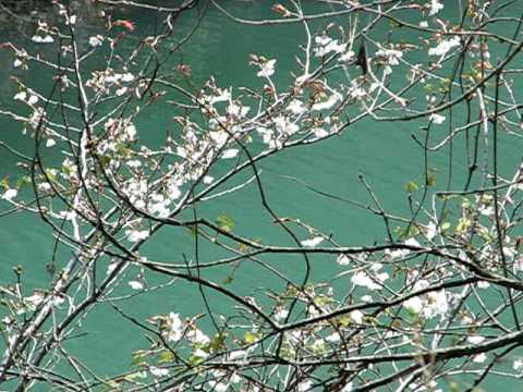 き を もの ば 山風 は 限り 短 吹 かね ど 春の 花 心 散る あれ