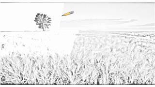 Auto Draw 2: Barley Field At Sunrise