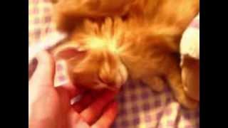 Страшное видео спящего котенка!!!