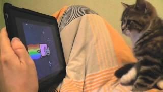 Kitten watching Nyan Cat (Котенок смотрит Ня кота)