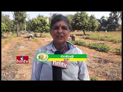 Drip Irrigation System Helps Farmers Make Better Use Of Water | Nela Talli | HMTV