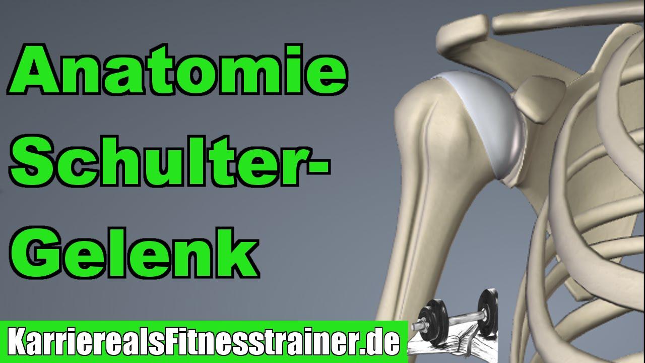 Die Anatomie des Schultergelenks - Alles was du für die B-Lizenz ...