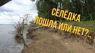 Рыбалка на селедку Самая простая и уловистая снасть Волга Лето 2021г