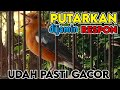 Putar Langsung Plong Cocok Buat Pancingan Anis Macet Malas Bunyi  Mp3 - Mp4 Download