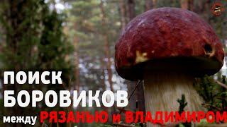 На поиск БОРОВИКОВ сосновых белых грибов в Мещерские боры между Владимиром и Рязанью