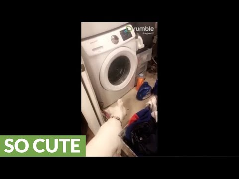 Curious pup head tilts at washing machine