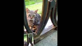 Кошка, серая мраморная