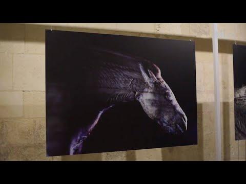 Exposition : des chevaux en clair-obscur