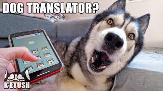 More Phone Apps Translate My Husky Speaking! Testing More Dog Translators!