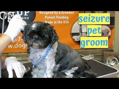 my-shihtzu-has-seizures---how-do-i-groom-a-pet-with-seizures