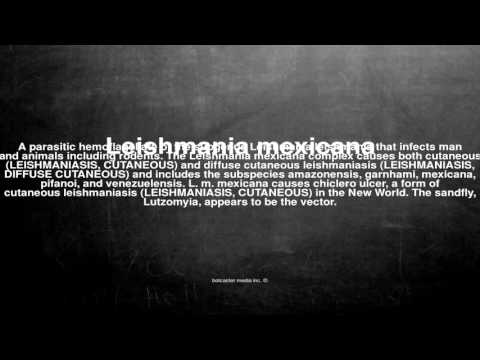Medical vocabulary: What does Leishmania mexicana mean