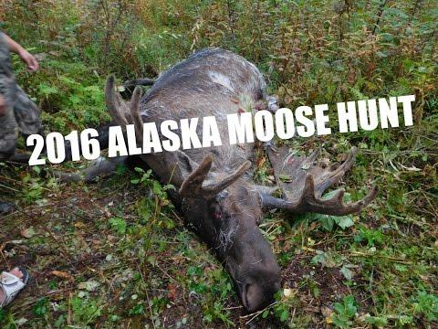 2016 Alaska Moose Hunting