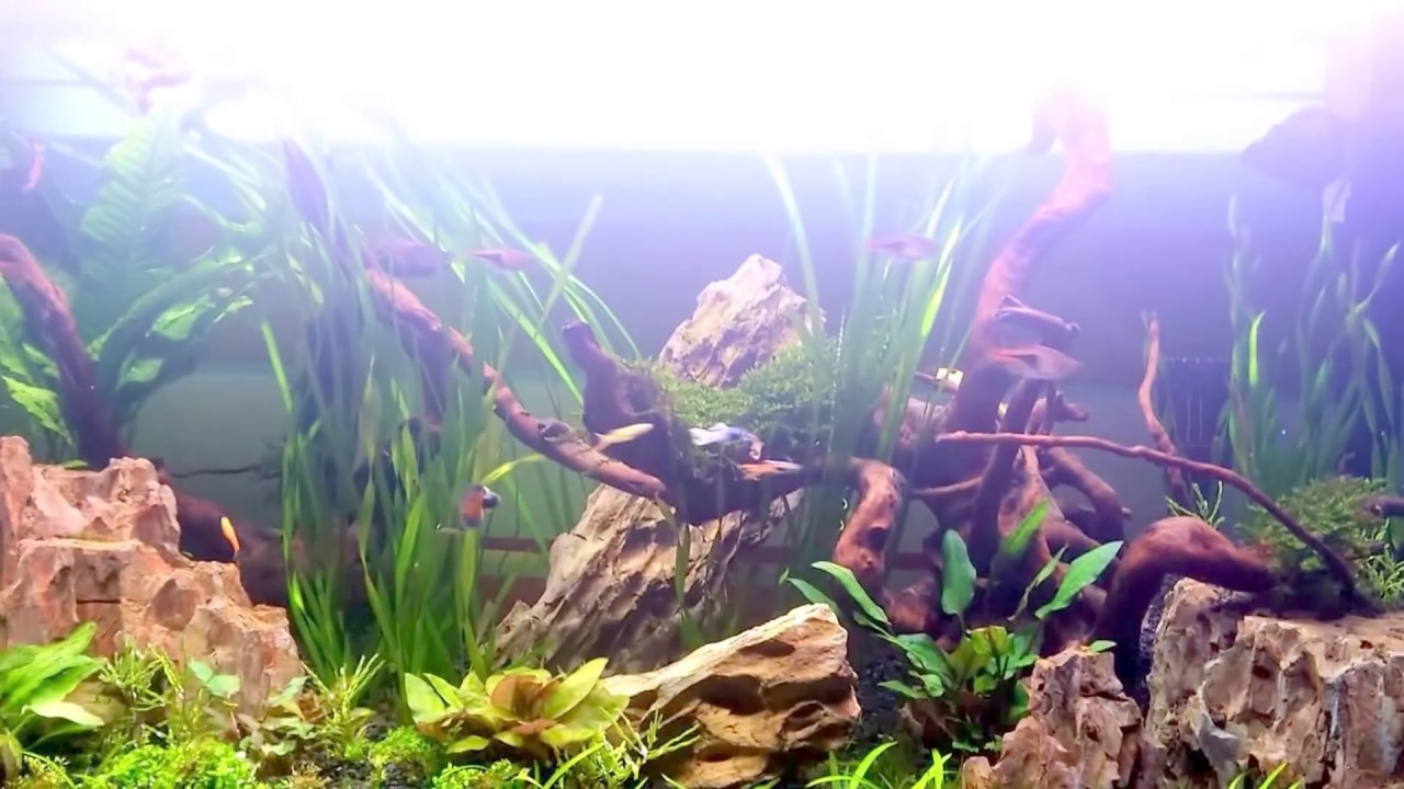 Fluval Fresh F90 Planted Aquarium Youtube