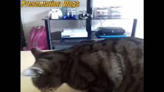The Cat eats wrap for breakfast