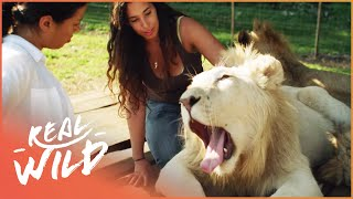 This Pride Of Lions Is Led By A Woman! | Real Wild
