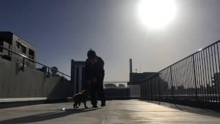 東京ブレーメンの屋上から。