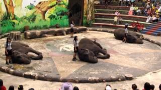 Lari karenaTidur dengan Gajah Sumatera - Taman Safari 2