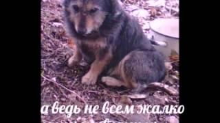 Трогательное видео о бездомных животных.