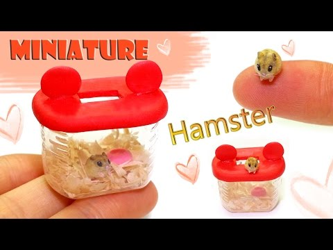 [DIY Miniature Hamster & Hamster case ] 미니어쳐 햄스터 & 햄스터 집 만들기
