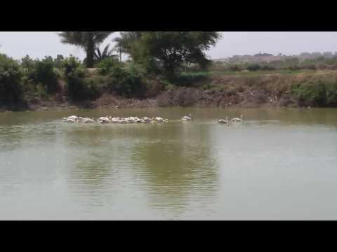 Surkhab in bhachau live