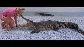 Шоу крокодилов/В пасти крокодила человек/Страшное зрелище/Таиланд/остров Ко Чанг/ огромные крокодилы